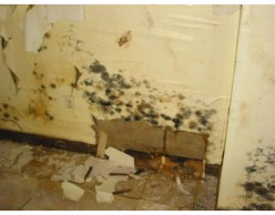 How to Remove Mold from Walls - Mold Removal Tips