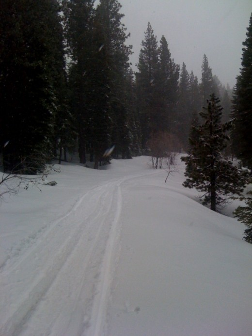 Cross country ski trails make good snow shoeing routes, but etiquette says it is poor form to snowshoe on the ski tracks themselves as the snowshoe's teeth will chop up the ski track.