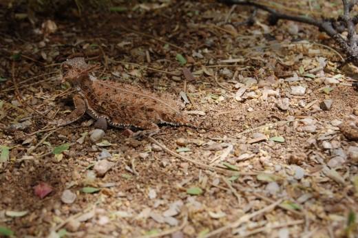 Lizard in the Gardens