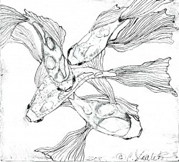 Fluid, Happy Koi, 2008...this was first sketched on a 6 x 6 square of acid free paper, then filled in with fine line marker