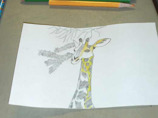 Here I began filling in the light yellow portions of the giraffes head and neck.