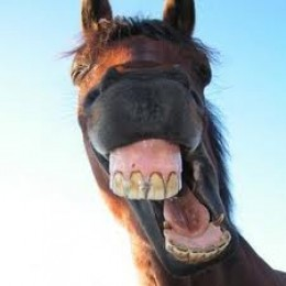 Horse smiles