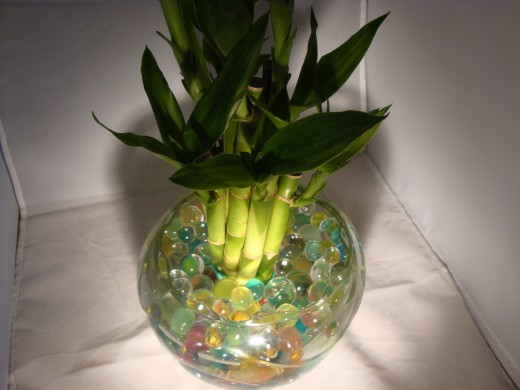 Water beads with bamboo plant