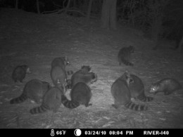 I40 captures at night by the Tchefuncte River.
