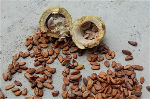Raw cacoa beans