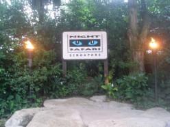 Night Safari!