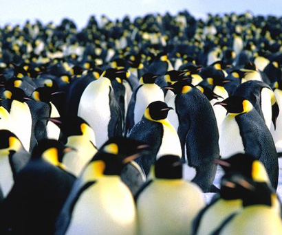When you're travelling to Antarctica, don't be alarmed if you have to share some of the space with the local penguins!