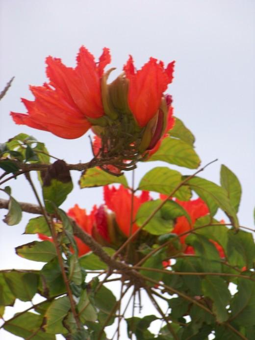 Beautiful wild red flower.