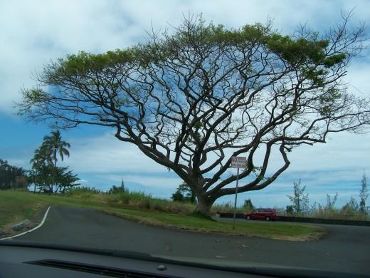 I love this unique tree