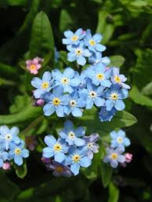 This flower essence will stimulate visions and help you contact Spirit Guides.