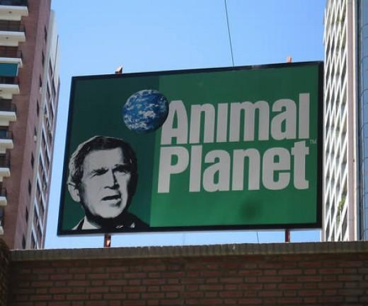 Animal????