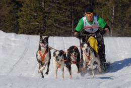 Bob Fawcett on the trail in the 4-dog Open Class, Bootleg Sled Dog Races
