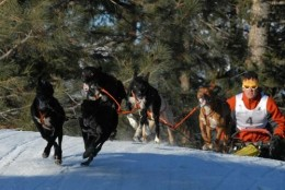 Bob Fawcett in the 6-dog Open Class, Bootleg Sled Dog Races