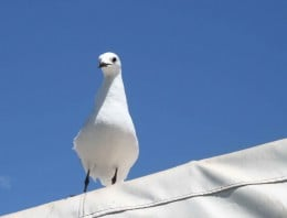 A gull rests on the awning of Kalkies