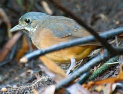 Endangered Bird Species in Ecuador