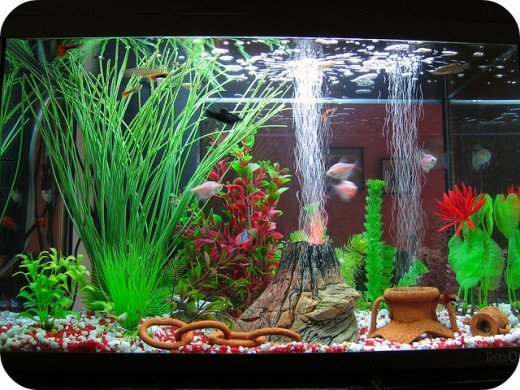 Choosing the best aquarium decorations for your fish - Aquarium mural deco ...