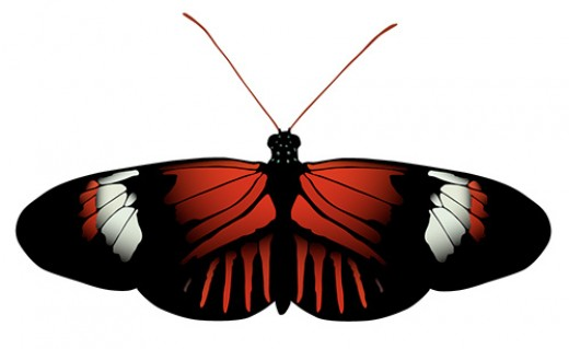 Heliconius Postman Butterfly