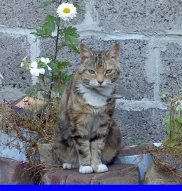 Lappeta. A True Queen amongst cats