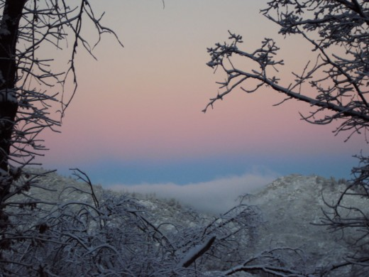 Snow draped trees with a pink layer in the sky.