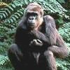 Larry The Gorilla profile image