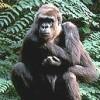 Larry The Gorilla profile image