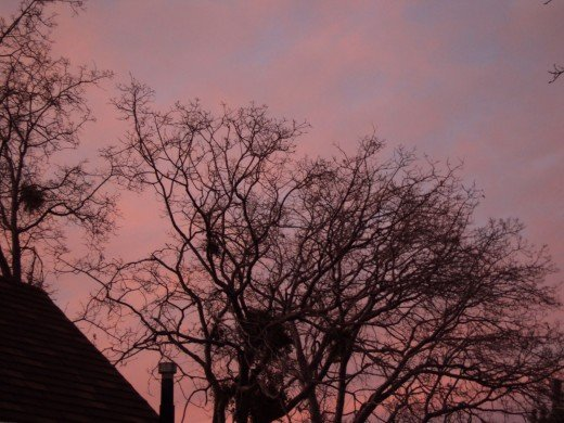 The pinkish tones of the sky goes well with the outline of the bare branches of the oak tree.