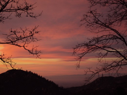 Branches on the right and left hand sides of the alluring sunset photograph.
