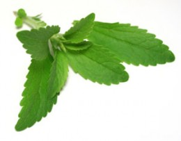 stevia rebaudiana leaves