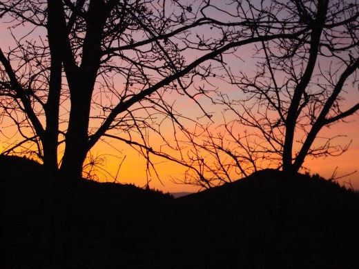 The branches of the oak trees create a mesh like effect for the sunset to peak out through.