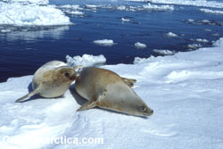 Photo by coolantarctica.com  a great source site recommend for research on Antarctica.and to view photos and video footage.
