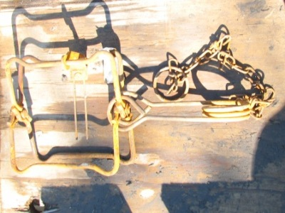 a Conibear 110 trap