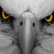karlschatz profile image