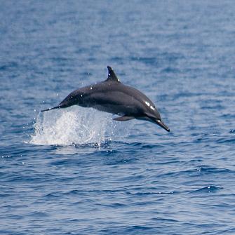 Dolphing Watching in Sri Lanka