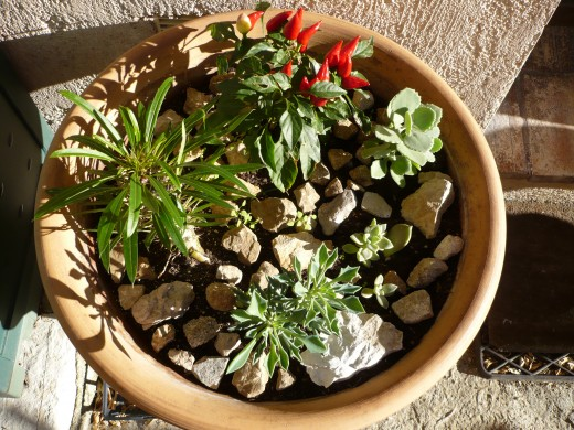 Many gardeners prefer succulents.