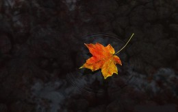This is a picture of a leaf floating around looking very tasteful.  Leaves and things are always good at looking tasteful and poetic.