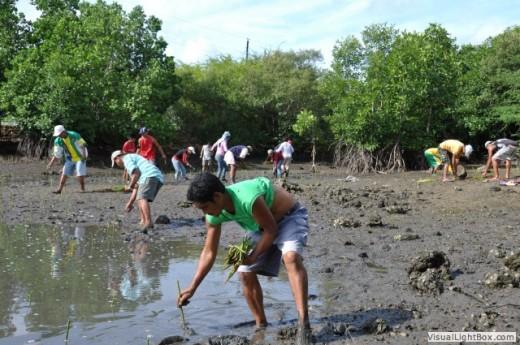 Planting mangrove saplings (Photo by El Verde