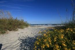 Beach Access On Hilton Head Island South Carolina