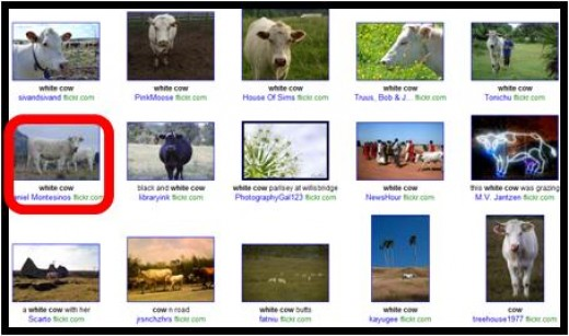 Step 4- Sift through your allowable selection of images and choose one to use on your hub or blog