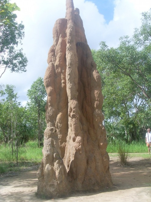 Habitat of termites in the Litchfield National Park.