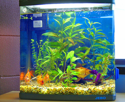 A fish aquarium comprises all the 5 elements of feng shui: water, wood (symbolized by plants), fire (symbolized by lighting and the red, yellow and orange colors of the fish), metal (the aquarium itself), and earth (the gravel and stones)