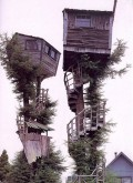 Why Build a Treehouse?