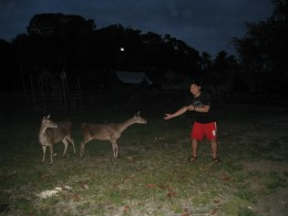A visitor playfully teases mouse deers.