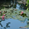Mom and Monet:  A Day at Giverny