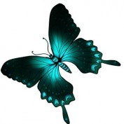 La Papillon profile image
