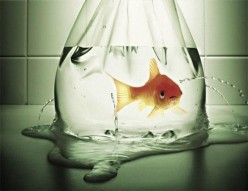 Helplessness; Unlearning The Habit That Holds You Back