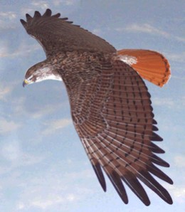 They that wait on the Lord shall mount up with wings as Eagles ( Is40 :31)