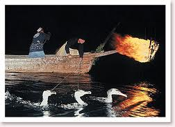 old method of catching fish using trained cormorants