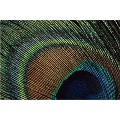 """The """"Eye"""" of the Quill Feather"""