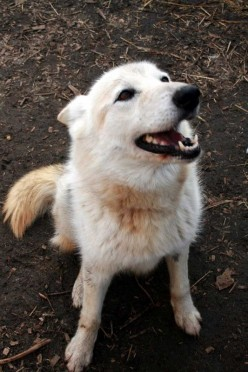 Timberly, a smiling, sweet as can be medium wolf mix who is up for adoption.Just ask.