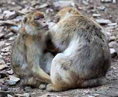 Look Billy. Look at the Monkeys